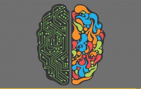 Когда наш мозг способен на максимум проявлять работоспособность