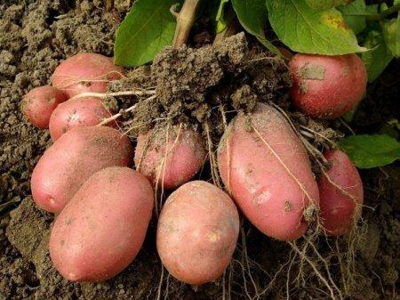 Идеальная картошка
