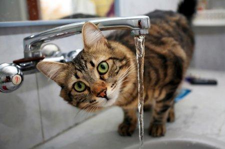 Питьевой режим кота