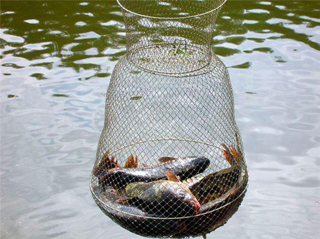 Как правильно хранить свежепойманную рыбу